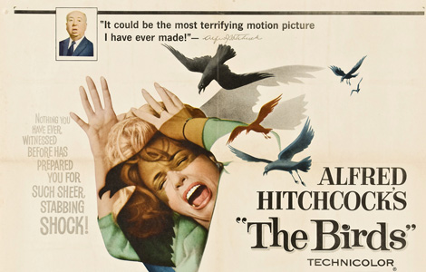 spotlight_Cinema-TheBirds.jpg